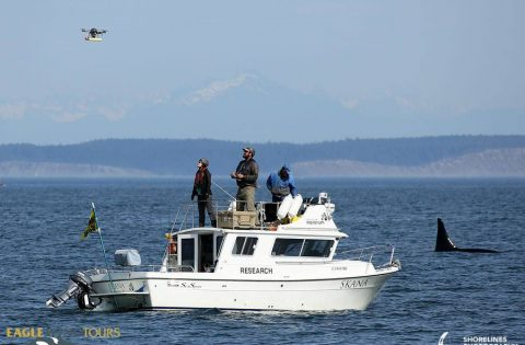 Drone research by DFO and Vancouver Aquarium