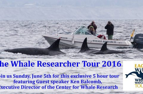 whale researcher tour supports the Centre for Whale Research