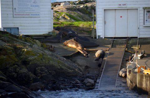 Elephant seals whale researcher tour