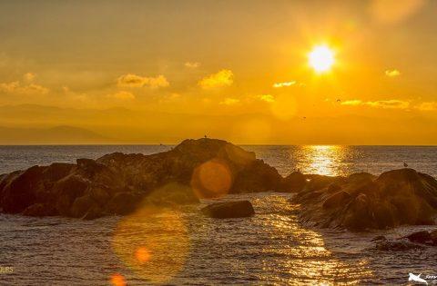 Rocky shorelines in the Salish Sea