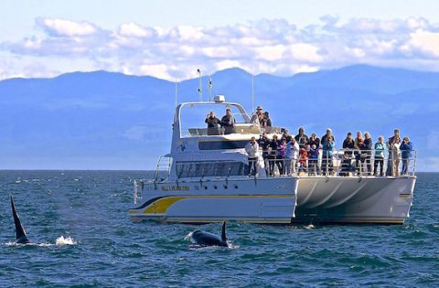 4 Ever Wild covered whale tour boat