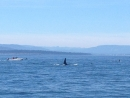 sept 19th 10am whale watching trip with capt brett and derek on goldwing