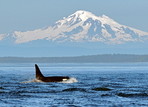 Best Whale Watching Tour Port Angeles