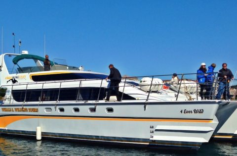 4 Ever Wild whale watching tour boat in Victoria, BC