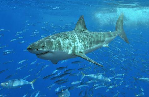 deadliest marine predators