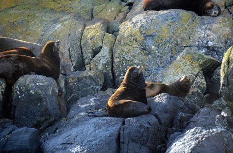 California sea lions striking poses in the afternoon sun