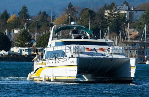 FEATURE - 4 Ever Wild NEW high performance luxury catamaran - photo Clint Rivers