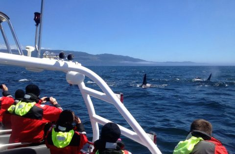Best Victoria, BC whale watching tour
