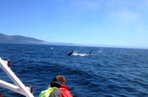 Taking in the wild whale views of the Salish Sea