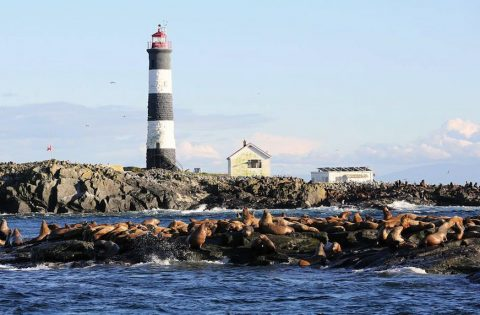 Race Rocks Lighthouse, built in 1860, is a popular sea lion hangout. Photo: Valerie Shore