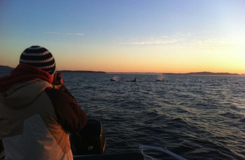 Sunset whale watching at its best!
