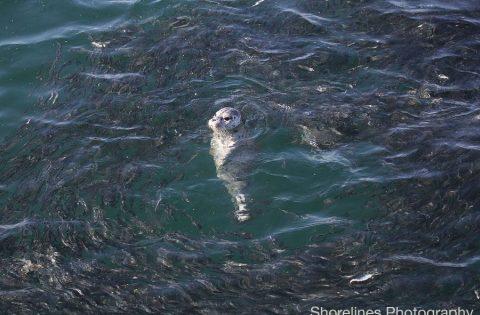 NO fish NO Blackfish whale researcher tour