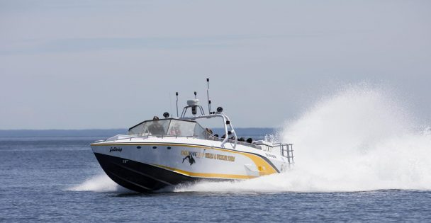 Goldwing Whale tour boat